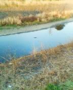 mariko-river.jpg
