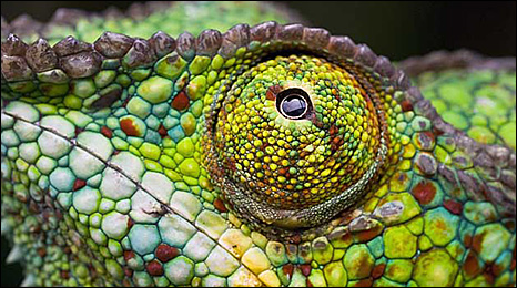 Even the eyes have coloured spots