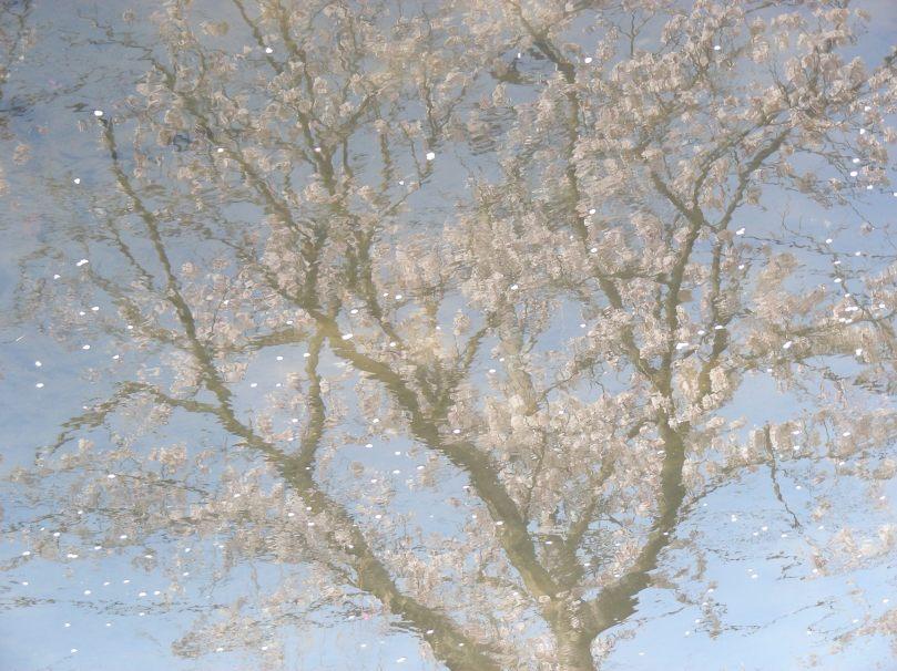 Aqua-blossom