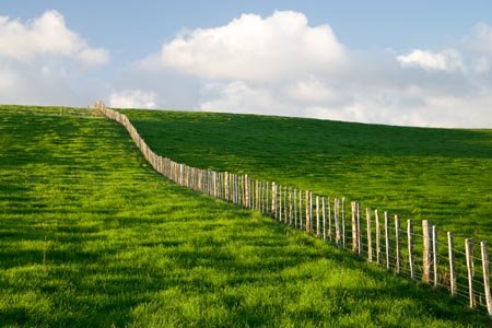 The great fence of New Zealand