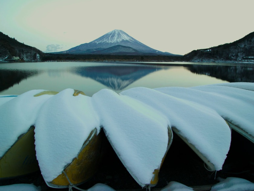Snow-covered tea plantation too