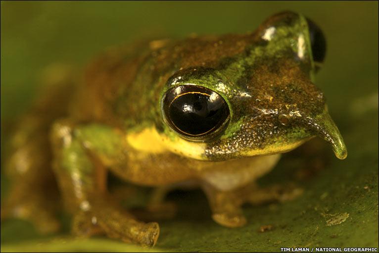 png-frog.jpg