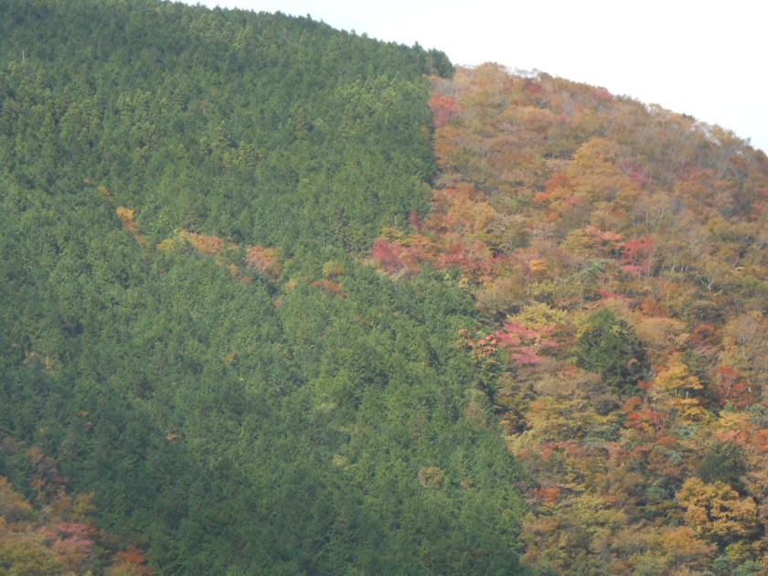 Evergreen and deciduous