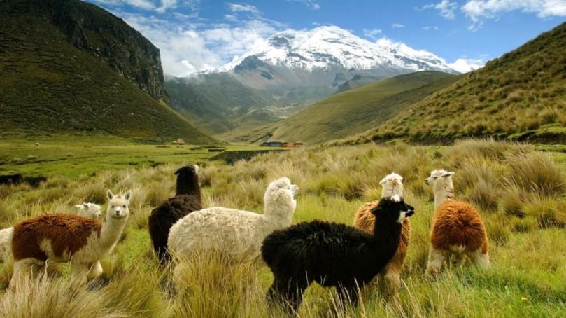 Ecuador Andes