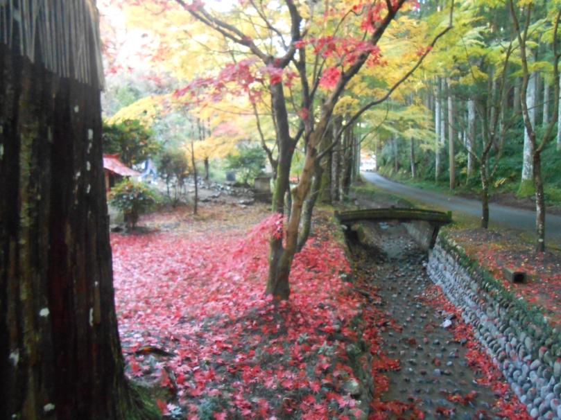 Autumn colours a