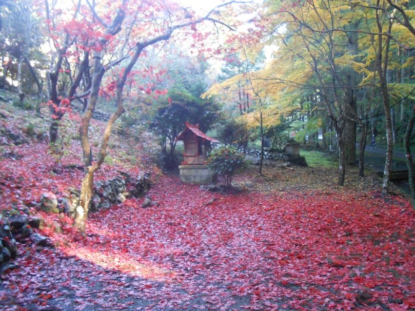 Autumn colours b
