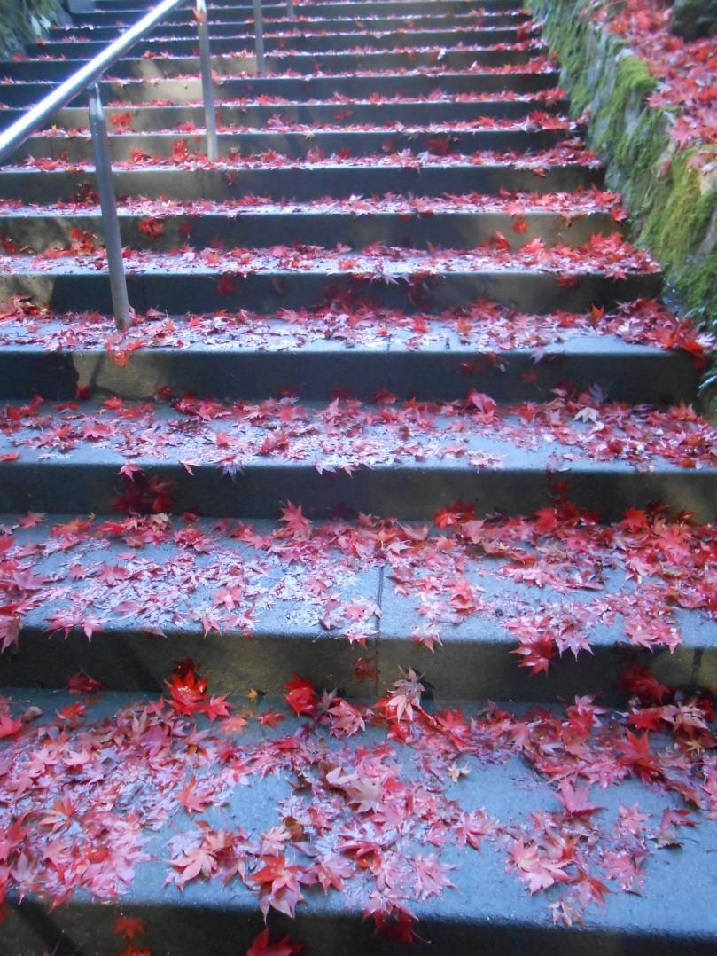 Autumn colours c