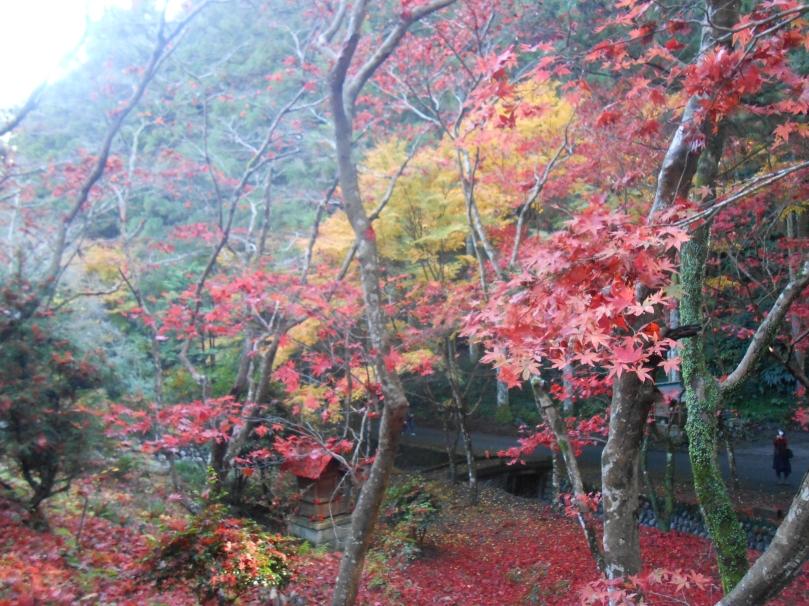 Autumn colours d