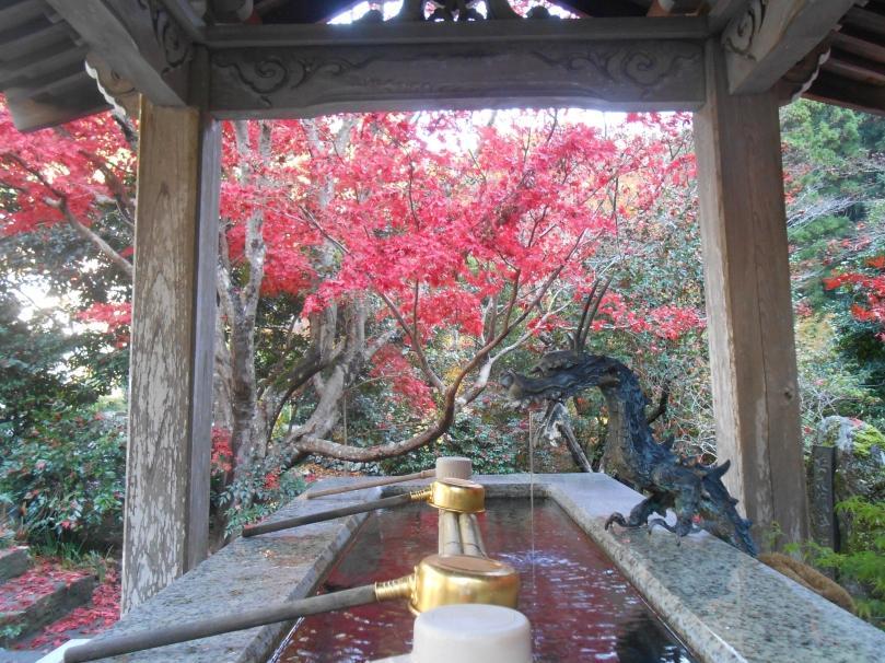 Autumn colours e