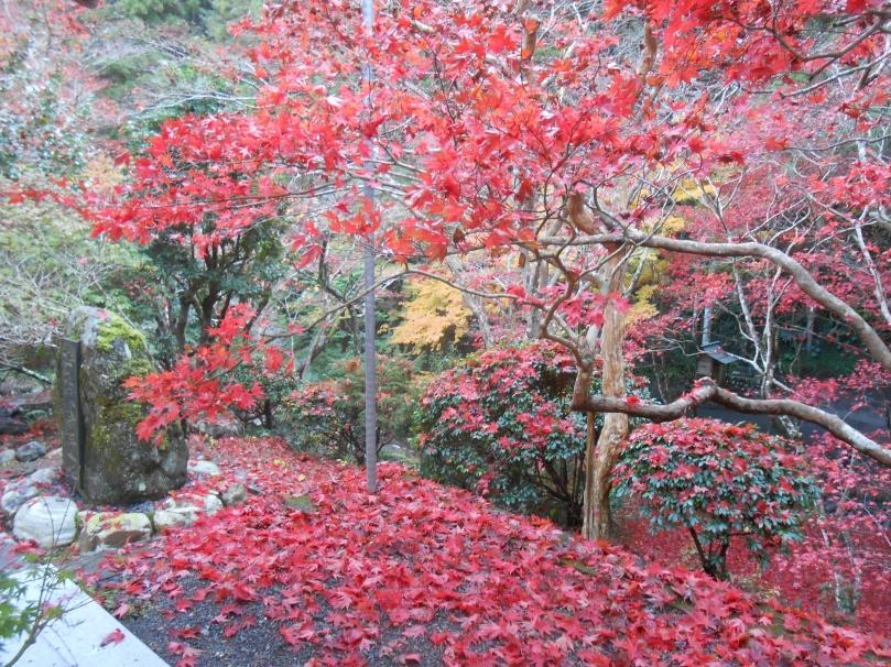 Autumn colours f
