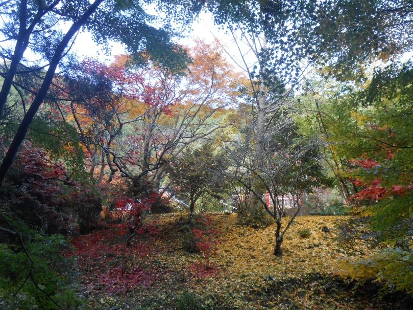 Autumn colours h